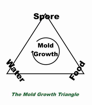 Mold Growth Triangle
