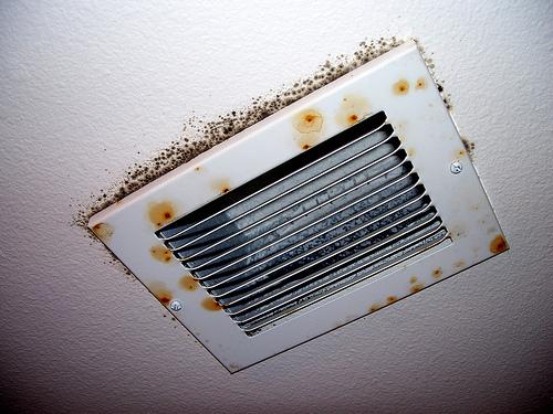 Moldy Ventilator